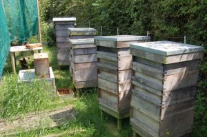 Andy Bennett beekeeping apiary