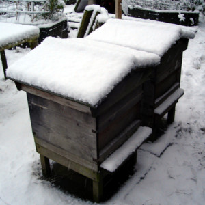 Andy Bennett beekeeping apiary winter