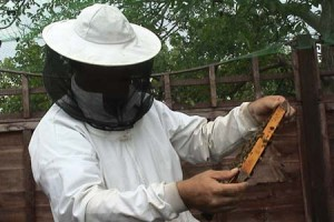 Andy bennett beekeeping demonstration 2