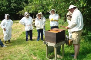 Andy bennett beekeeping demonstration