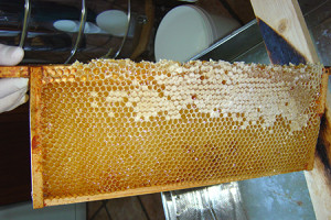 Andy bennett beekeeping extracting