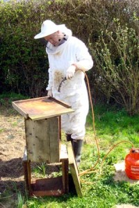 Andy bennett beekeeping spring cleaning