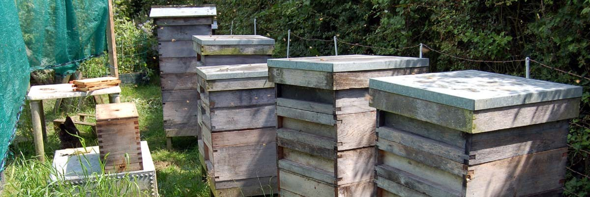 Permalink to: A year in beekeeping