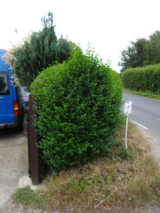 hedge topiary 1