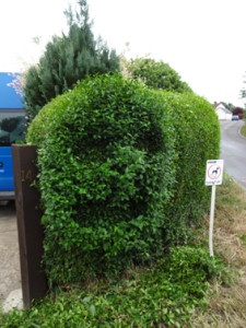hedge topiary 2