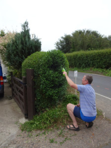 hedge topiary 3