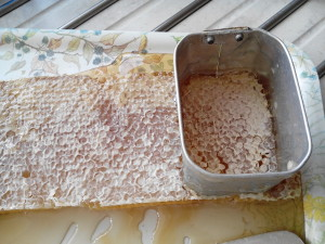 raw comb honey 2