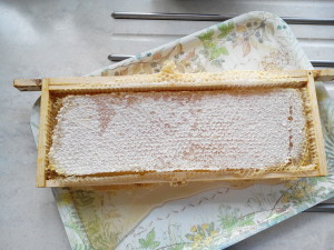 raw comb honey 4