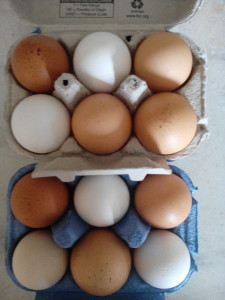 coloured hens eggs