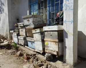 turkish beekeeping