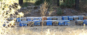 turkey beekeeping 2