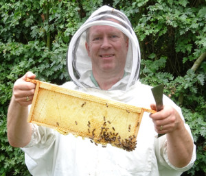 Beekeeping bees frame of honey
