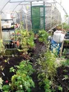 polytunnel time