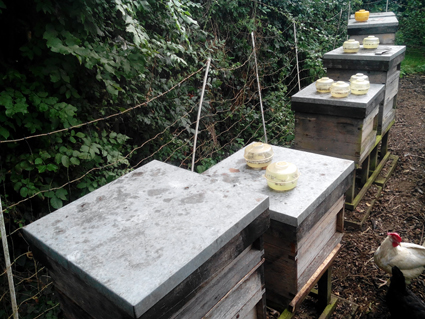 beekeeping autumn